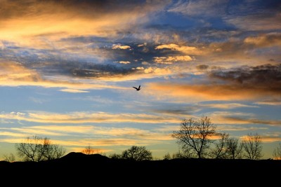 Bird Flying At Sunset - Source: Wiki Commons (Public Domain)