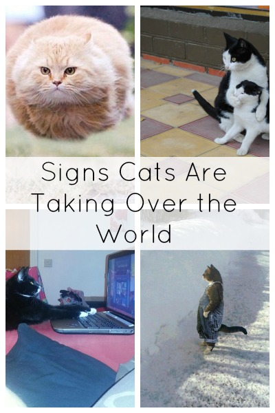 14 Signs Cats Are Taking Over The World by www.babble.com