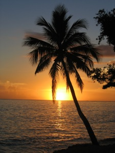 Sunset over Pacific ocean with coconut palm tree by	Andrew Mandemaker