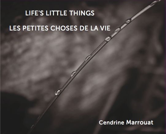 Lifes-Little-Things