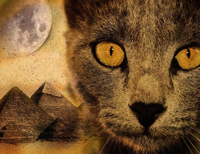 cat-2840476_1920