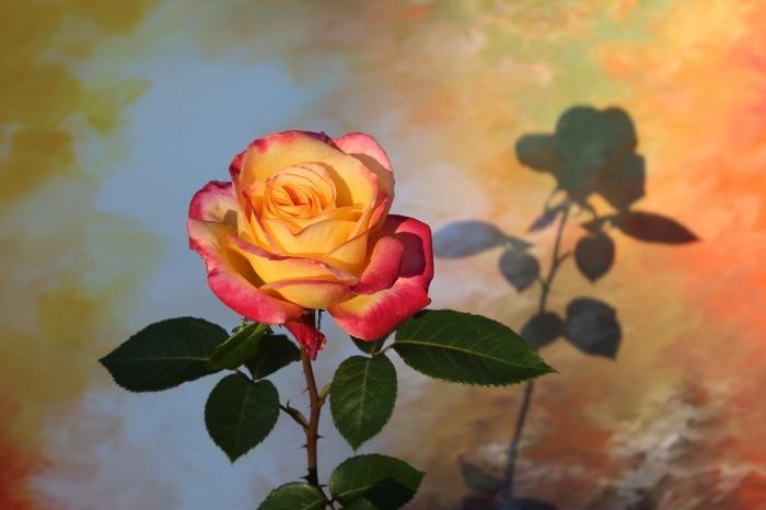 flower-3350465_1920