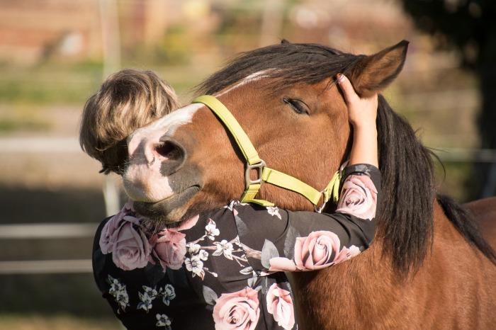 horse-3712842_1920