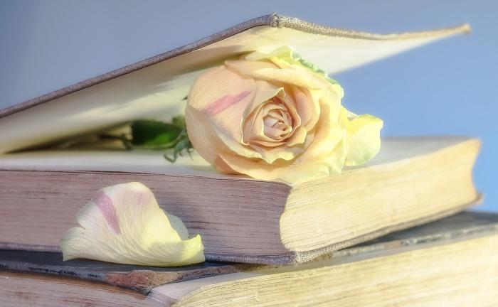 rose-2101475_1920