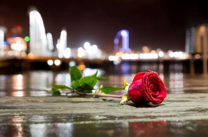flower-2508954_1920